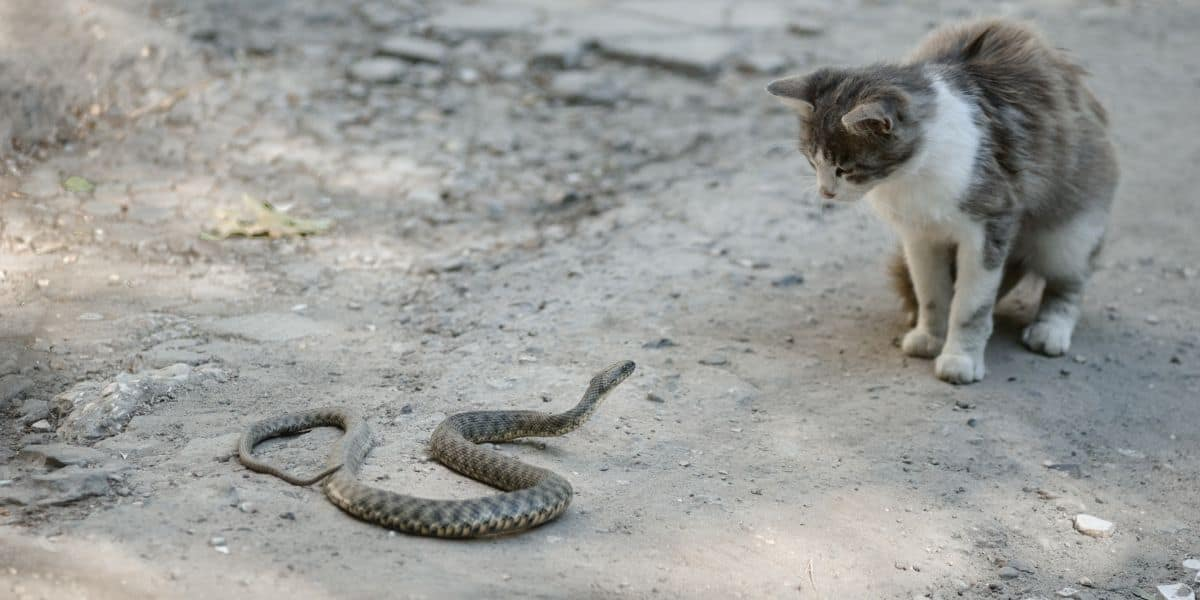 snake and cat