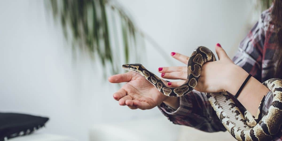 snake with owner