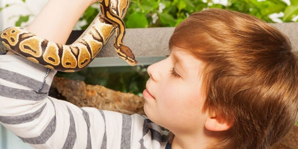 pet snake with young boy