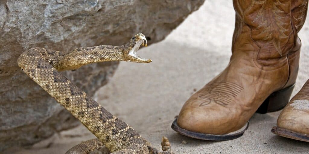 snake biting boots
